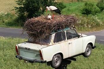 My Travelling Nest - Funny Pictures and Images
