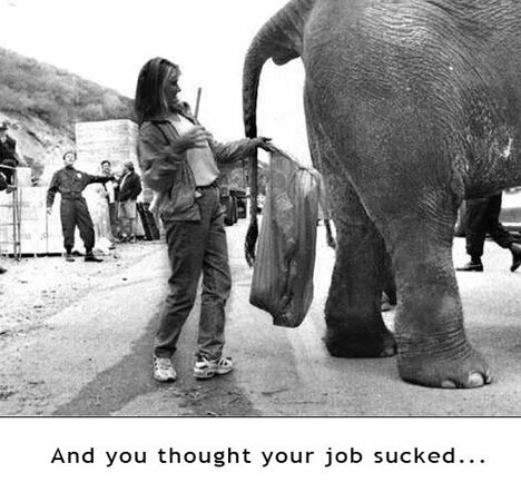 Collecting Elephant's ....... - Funny Pictures and Images