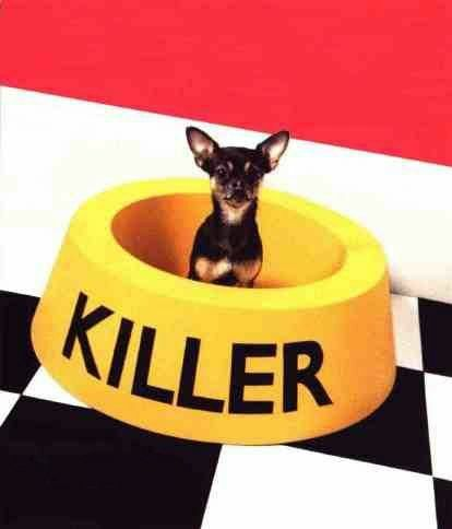 The Tiny Killer Dog - Funny Pictures and Images