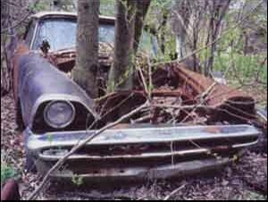 Tree Through Car - Funny Pictures and Images