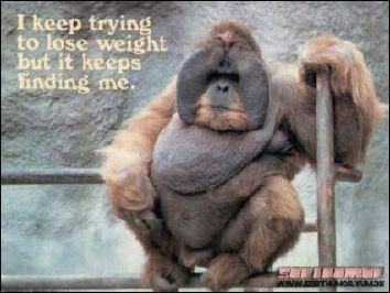 the weight sensitive chimp pictures and images