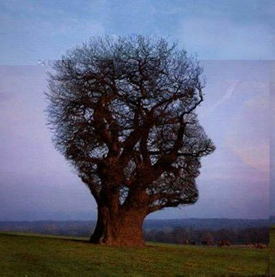 The Tree Of Human Face? - Funny Pictures and Images
