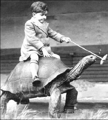 The Riding Tortoise - Funny Pictures and Images