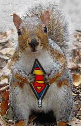 The Super Squirrel - Funny Pictures and Images