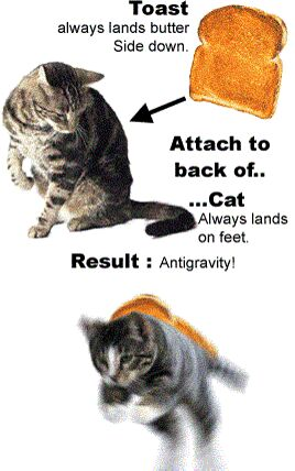 Cat Antigravity - Funny Pictures and Images