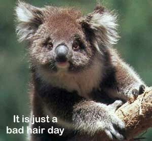 A bad hair day - Funny Pictures and Images