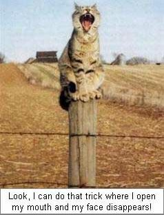 Look at what I can do - Funny Pictures and Images