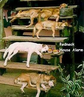 A lazy alarm system - Funny Pictures and Images