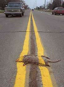 Road Kill - Funny Pictures and Images