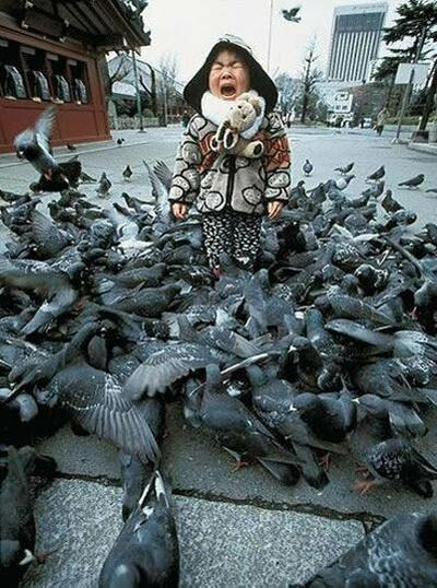 Scared of pigeons - Funny Pictures and Images
