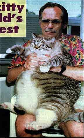 Fat cat - Funny Pictures and Images