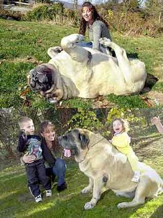 Circus dog - Funny Pictures and Images