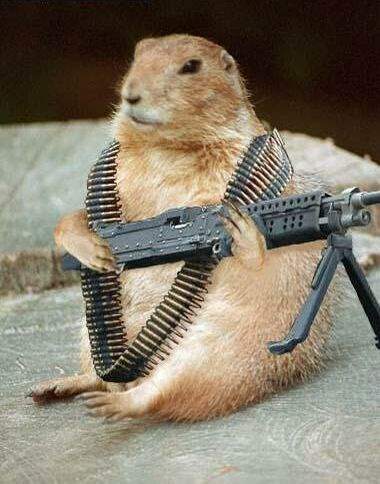 Watch squirrel - Funny Pictures and Images