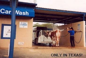 Horse Wash - Funny Pictures and Images