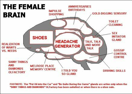 The female brain - Funny Pictures and Images