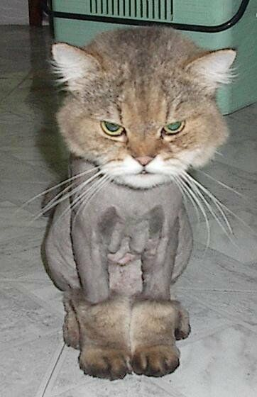 Furball no more - Funny Pictures and Images