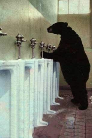 The Mannered Bear - Funny Pictures and Images