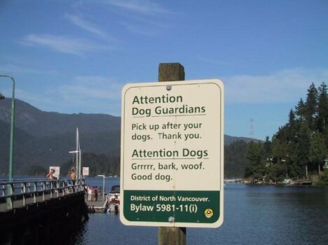Attention Dogs - Funny Pictures and Images