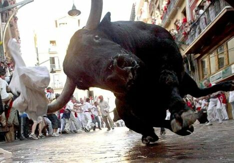 Big Bull - Funny Pictures and Images