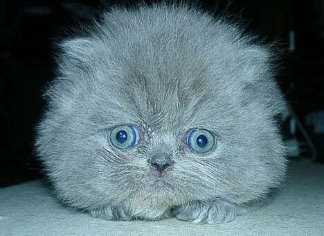 What kind of cat is this? - Funny Pictures and Images