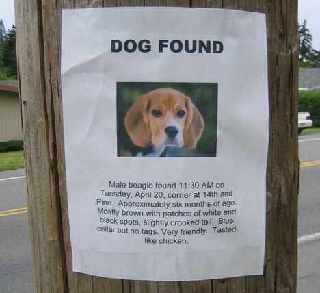 Dog Found - Funny Pictures and Images