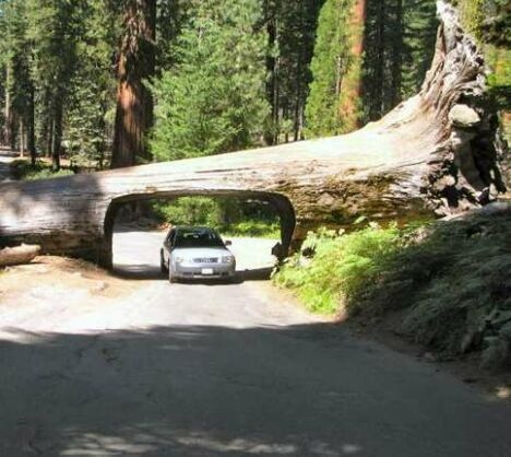 Nature's drive thru - Funny Pictures and Images