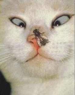 Crosseyed cat - Funny Pictures and Images