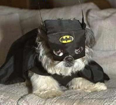 The Bat Hound - Funny Pictures and Images