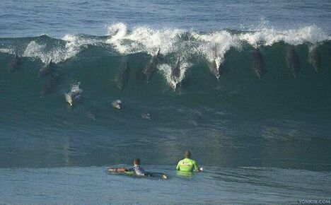 Surf's Up - Funny Pictures and Images