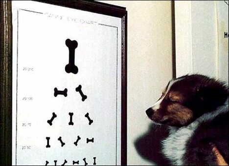 Dog's Eye Test - Funny Pictures and Images