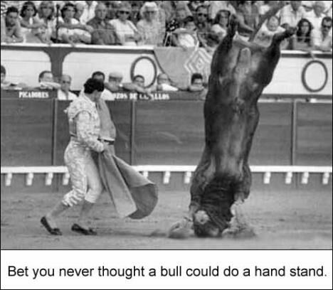 Bull Doing A Hand Stand - Funny Pictures and Images