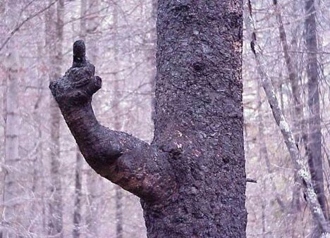 Tree's Message - Funny Pictures and Images