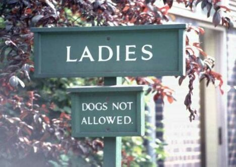Dogs or Ladies? - Funny Pictures and Images