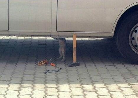 Whos fixing your car? - Funny Pictures and Images
