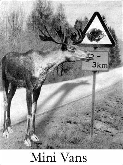 Tall Deer? - Funny Pictures and Images