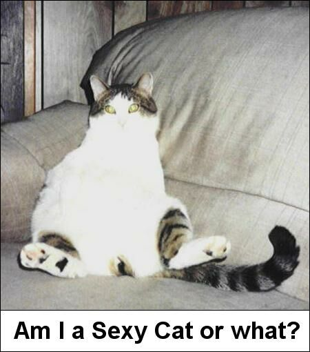 Sexy Cat? - Funny Pictures and Images