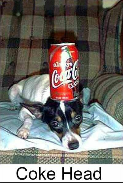 Coke Head - Funny Pictures and Images
