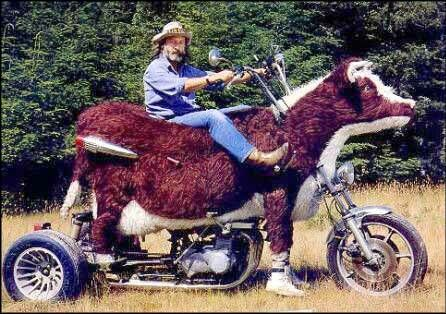 Moo-torcycle - Funny Pictures and Images
