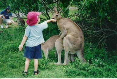 Kangaroo Having Fun - Funny Pictures and Images