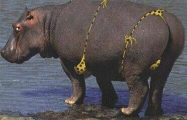 Mannered Hippo - Funny Pictures and Images
