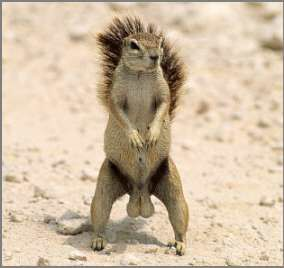 Standing Animal - Funny Pictures and Images